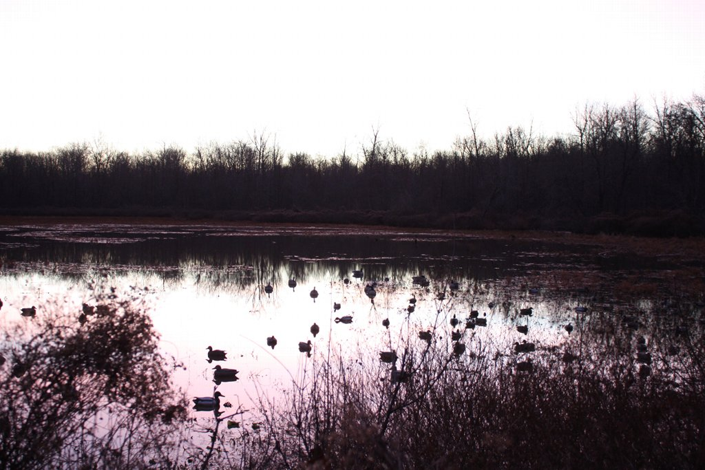 We have private waterfowl blinds in flooded timber and sloughs.
